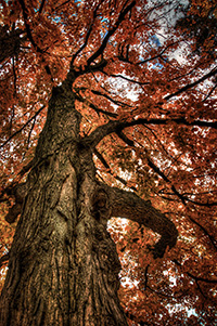 Fall is here - John Cianfarani-thm