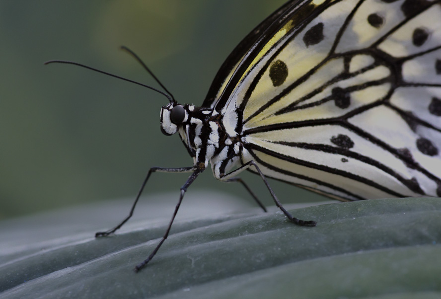 2015 Spring -Butteryfly Up Close - John Cianfarani.jpg