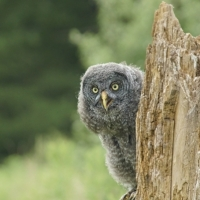 August 9th Canadian Raptor Conservancy