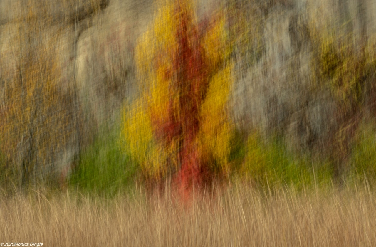 ICM intentional camera movement 2020-11-29 - Kerncliff Park