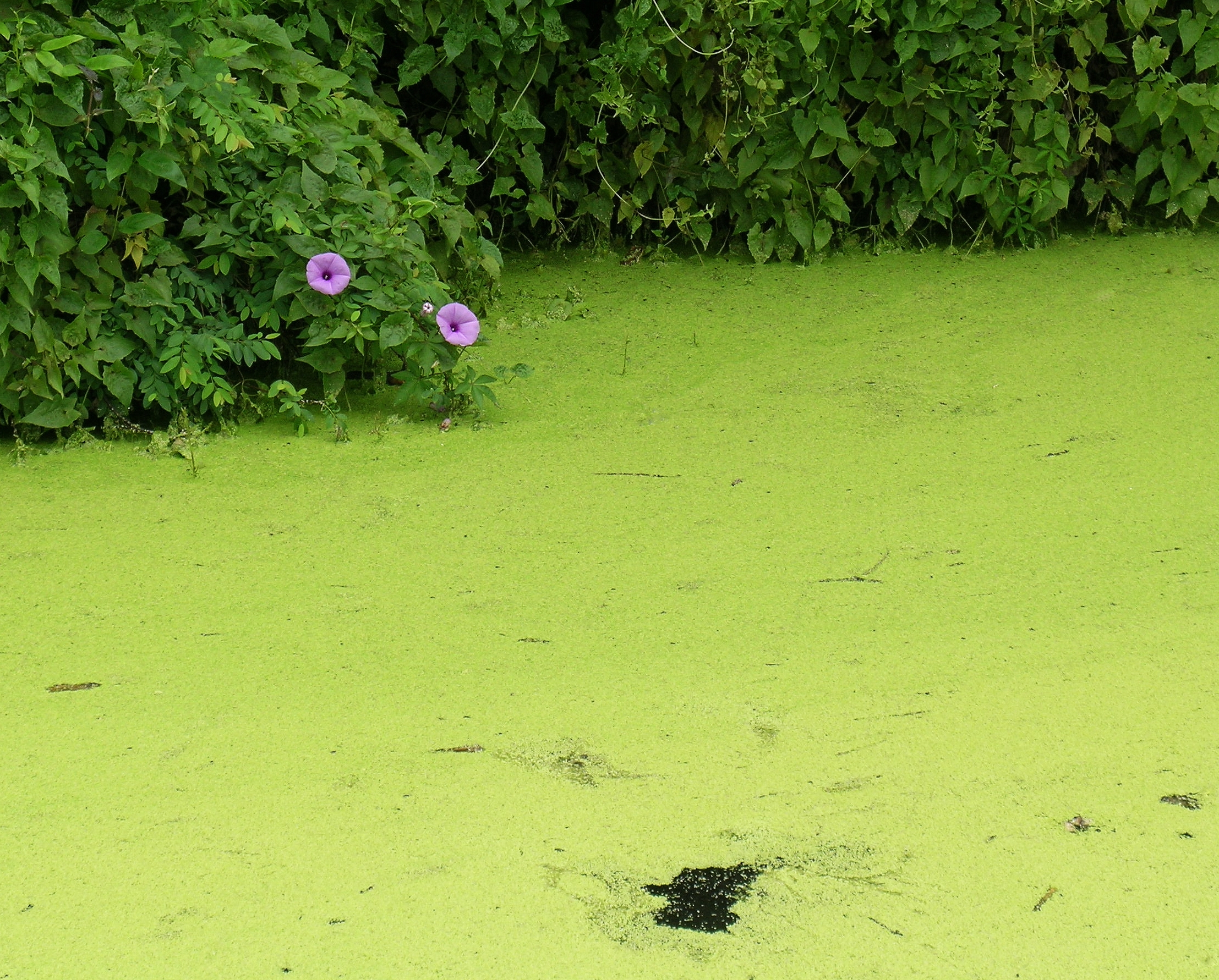 Robin Green water2.jpg