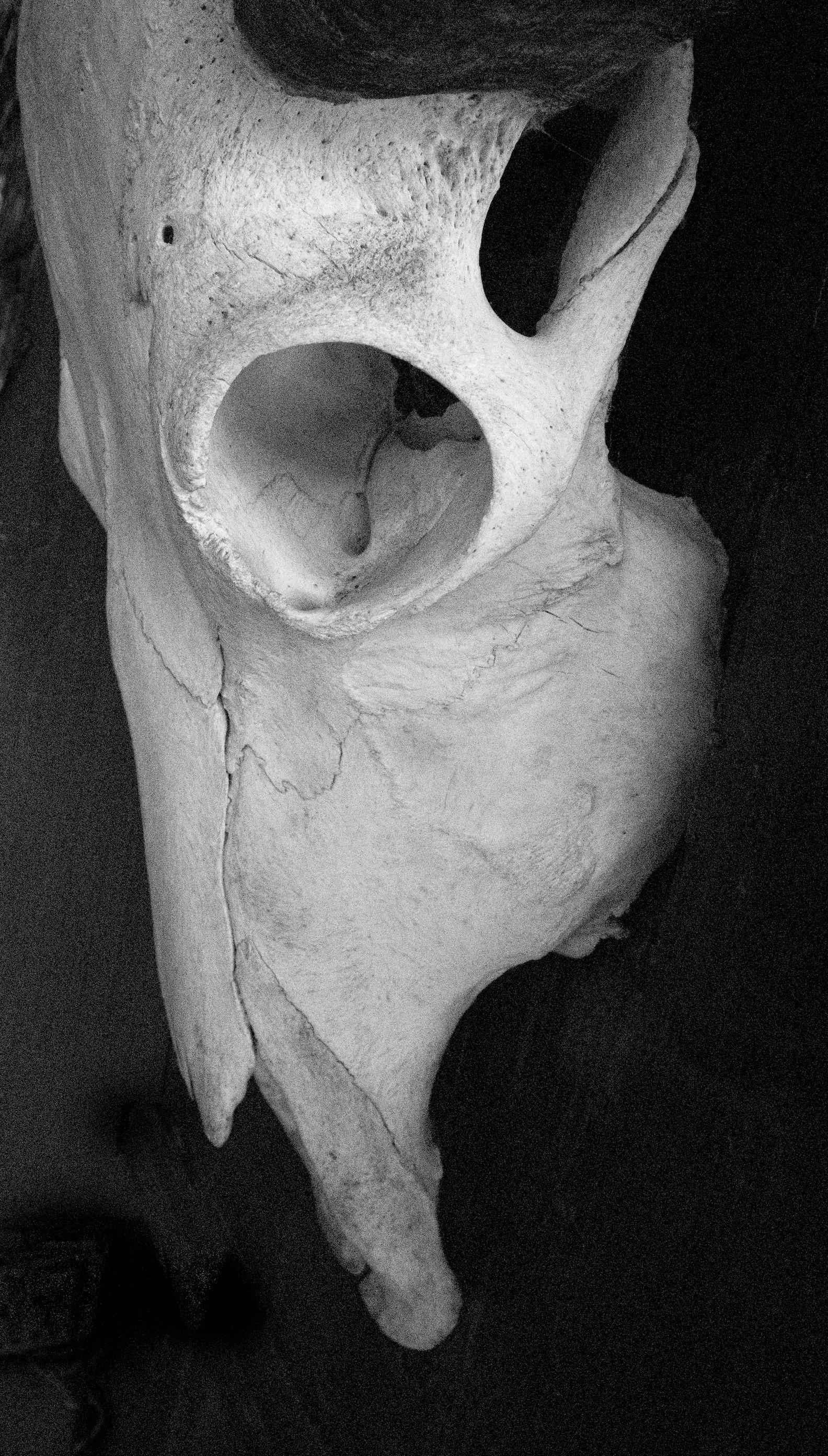 Robin King - Skull.jpg