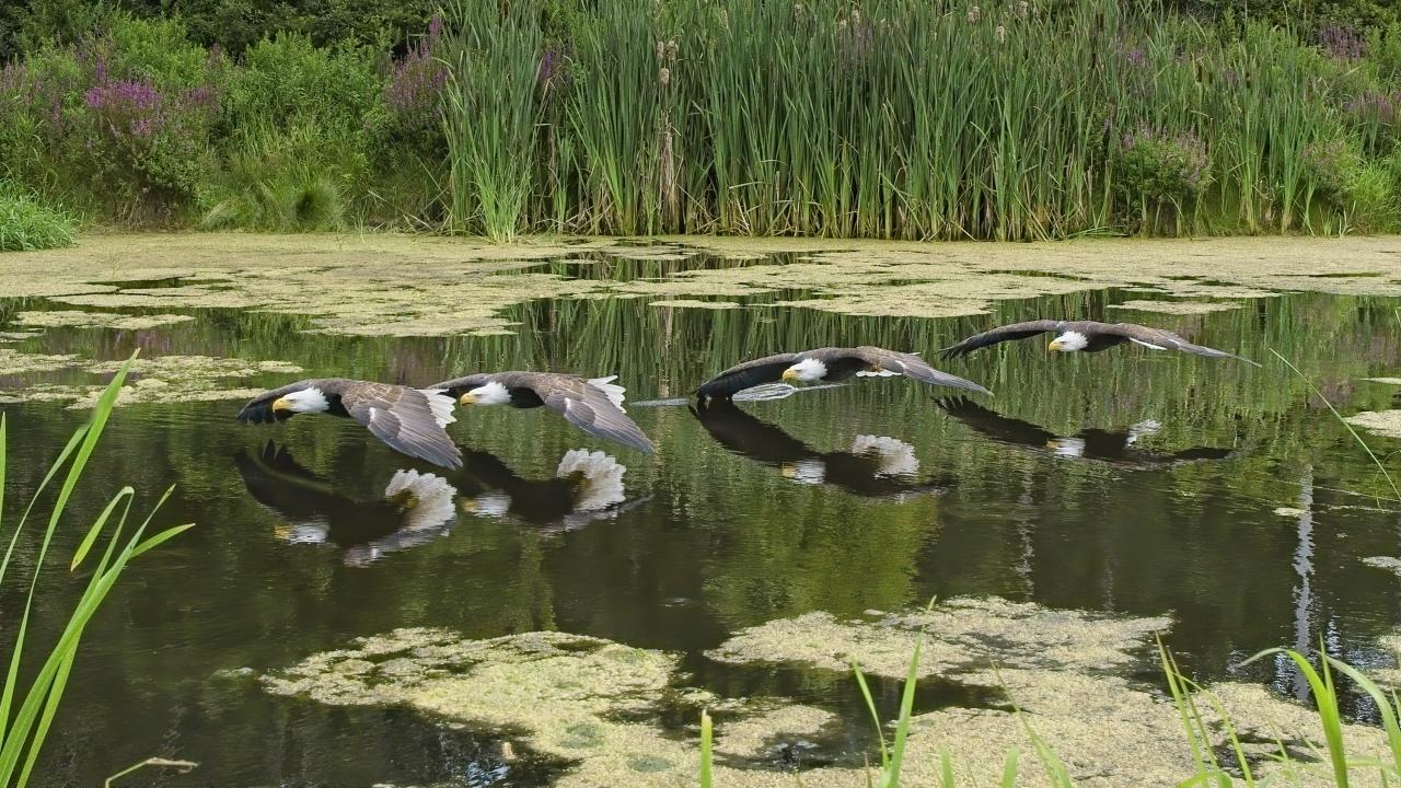 Can. Raptor Conservancy Aug. 9 2020 copy3 -