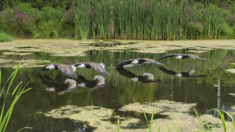 Can. Raptor Conservancy Aug. 9 2020 copy3