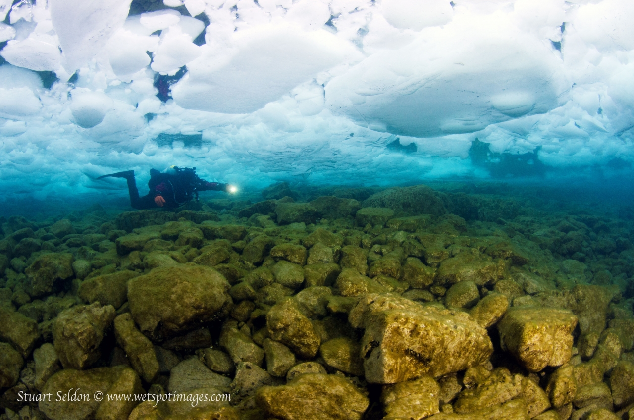 All About Underwater Photography with Stuart Seldon