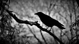 Birds  2017-11-21