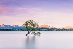 Navy Nhum - Wanaka Tree After.jpg