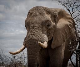 Kruger Park Safari Oct 2018 2018-11-26