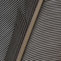 Superb Lyrebird.IX.jpg