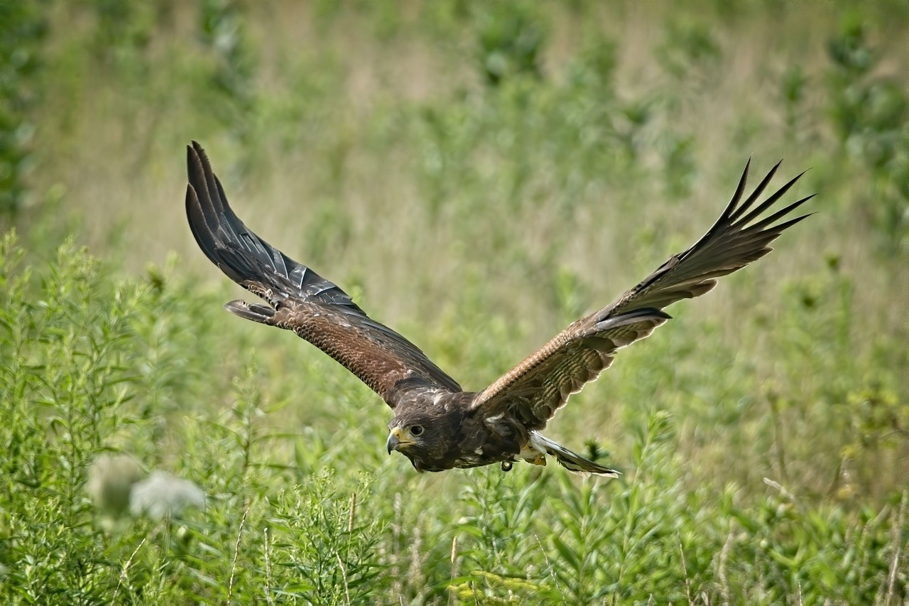 Canadian Raptor Conservancy Outing 2020-08-04 -